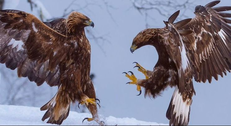 Kung Fu Eagle Style Imperial Eight ...